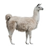 Chaffhaye for Llamas and Alpacas